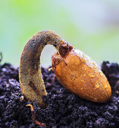 Semienko, ktoré nikdy nevyrástlo